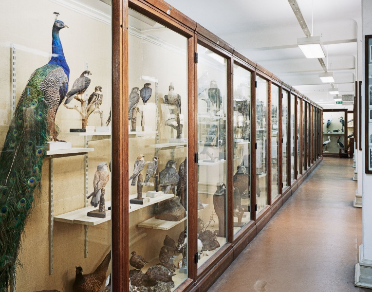 Museum, 2014