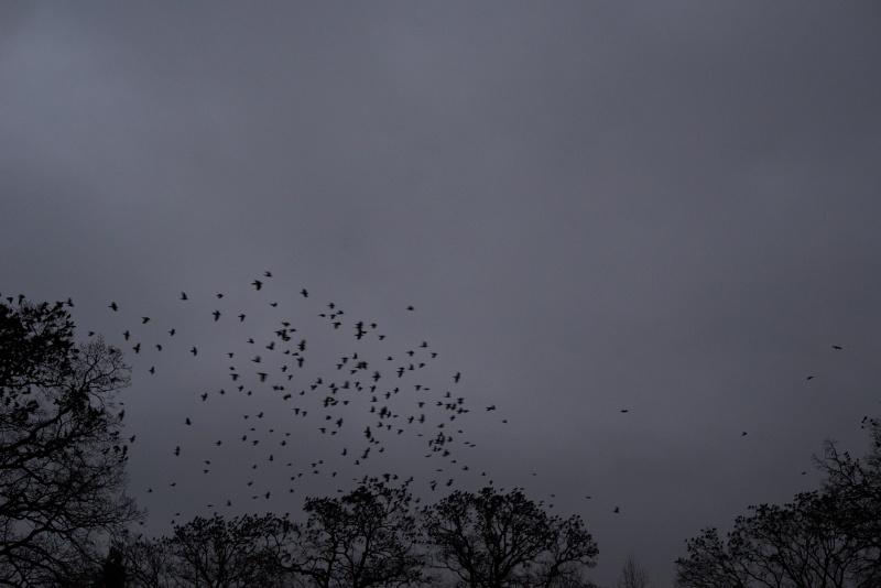 Birds, 2014