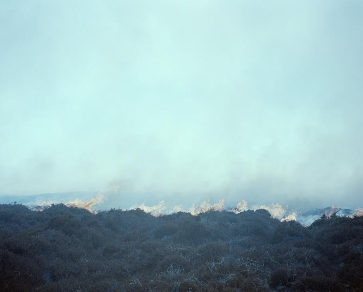 Fire, 2016
